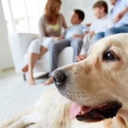 We aim to provide medical and surgical care for a wide range of pet animals